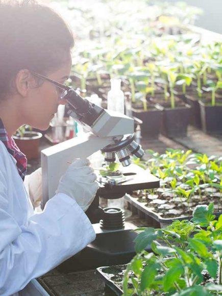 Máster en Biotecnología