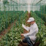 Diferencias principales entre calidad y seguridad alimentaria